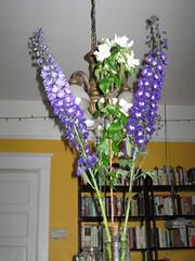 birthday flowers (libraryrachel) Tags: delphinium