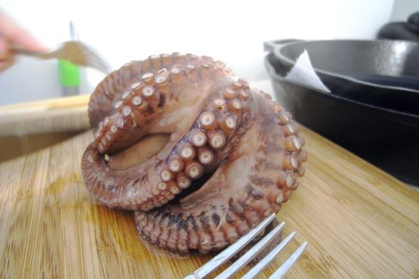 javier's octopus