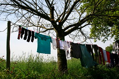 (heffy88) Tags: trees spain clothes wandern caminodesantiago