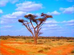 Sky Is The Limit, Awdal Region. (Yusuf Dahir's Somaliland Photos) Tags: explore somaliland dazzling artcafe damniwishidtakenthat awdalregionsomaliland worldglobalaward globalworldawards nearborama