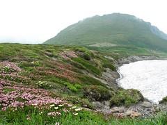 桂月岳とエゾコザクラ