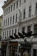 20080718_Vak_2008_1020 (Antoon's Foobar) Tags: vakantie ljubljana juli 2008 ljubjana duiven duif sloveni
