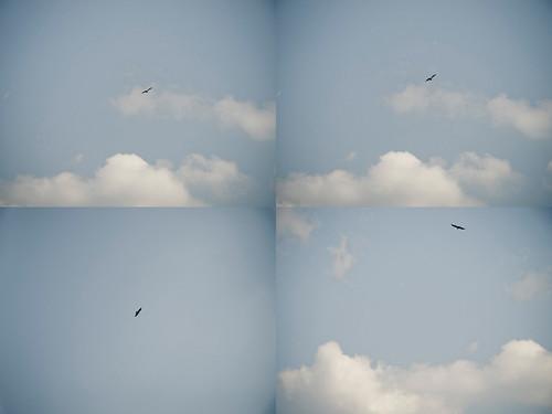 eagle_flypass