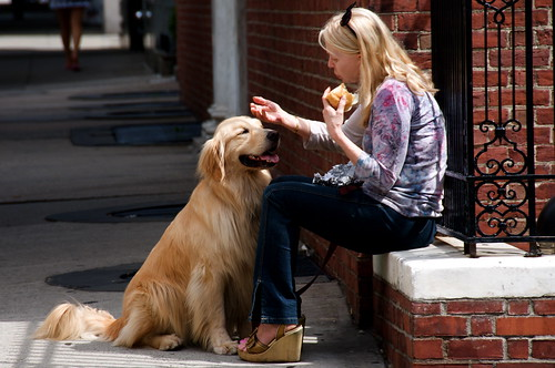 Woman stroking a Golden Retriever in the street