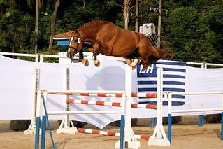 Horse - Exagerado !!!