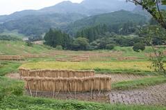 大山千枚田を見下ろす