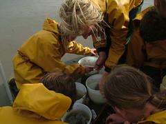 Sorteren: viskes bij de viskes, krabben bij de krabben (Juffie_Tilia) Tags: oostende kruien
