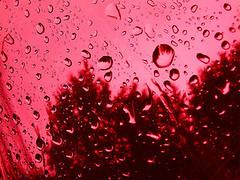 Lluvia de sangre 2889727606_dfb466c744_m