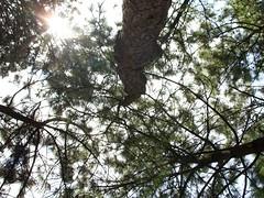 Un resplandor, una esperanza (Erick Alejandro) Tags: bosque resplandor
