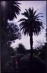 palmiers (Pascal Rue14N14) Tags: holidays lisboa pascal holga135