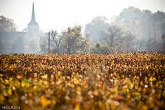 Bourgogne I (colas81) Tags: sun soleil loveit paysage bourgogne vignes contrejour matin loveitneverflood ctejour