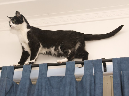 Joey the tightrope walker