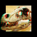 Dinosaur Skull by LadyCrafthole