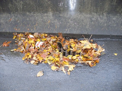 Leaves Clog A Catch Basin (WSDOT) Tags: from leaves clearing drains