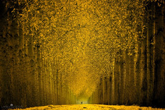 Cycle in Gold (larsvandegoor.com) Tags: road red yellow forest landscape gold bravo path leafs magical