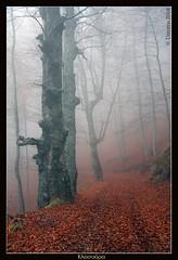 (D. Smixiotis) Tags: beautiful fog forest canon wonderful photography photo view unique gorgeous magic great best greece excellent lovely marvelous magnificent splendid terrific the kastoria naturesfinest  canon best  goldstaraward   40d klisoura