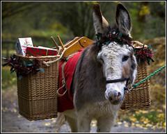 The Christmas Market (strussler) Tags: christmas england museum canon eos westsussex market donkey sigma holly apo gifts presents tinsel baskets 5d wicker singleton 70300 panniers wealdanddownland impressedbeauty vosplusbellesphotos