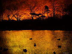 Untitled (Steve-h) Tags: sky orange texture water gold pond silhouettes ducks evergreens finepix fujifilm wintertrees barebranches ghostbones steveh aplusphoto platinumheartaward goldstaraward s100fs favemoifrance reflectyourworld
