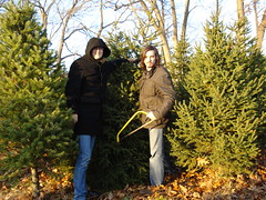 Christmas Tree Procurement