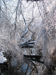 is09_49 (mightb_me40356) Tags: snow icestorm lexingtonky
