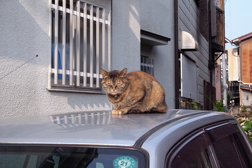 Today's Cat@20090526