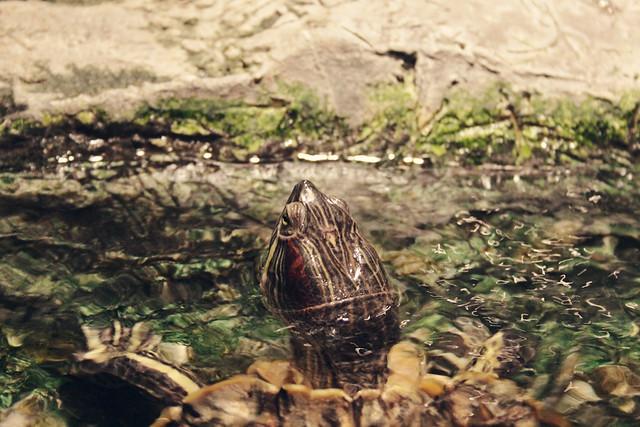 MODS turtle 2