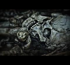 Bones / British Museum (*Photofreaks*) Tags: england people male men london horizontal geotagged dead skeleton death skull healthy body teeth chest science x medical health human anatomy ribs medicine torso bone educational therapy chiropractic britishmuseum biology healthcare skeletal biological chiropractor scientific gbr orthopedic anatomical photofreaks grosbritannien geo:lat=5151945203 geo:lon=012694359 wwwphotofreakseu laradphotography