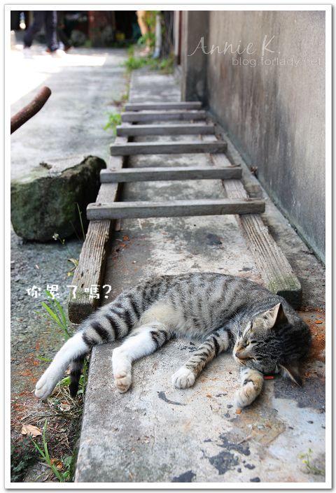 平溪線貓6