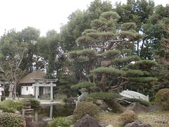 In Takoshima in Japan (Shaima82_4) Tags: bridge lake tree japan temple ship nippon 20 maru swy swy20 takoshima