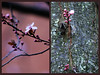 Sakura Diptych (frustrated.artist) Tags: spring sakura cherryblossoms soe abigfave anawesomeshot flickrenvy thenaturegroup theunforgettablepictures thegoldenmermaid theperfectphotographer life~asiseeit mikesdance