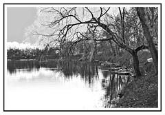 Trees,river and boat (fabry ... ) Tags: blackwhite italia bianconero lodi belgiardino circolofotograficopaullese fabryfb