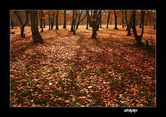 (Ali Shokri / www.alishokripix.com) Tags: tree fall landscape photography iran shots quality azerbaijan loveit just photoart soe 07 ايران علی goldenglobe blueribbonwinner supershot 5photosaday 35faves abigfave platinumphoto anawesomeshot aplusphoto superbmasterpiece diamondclassphotographer flickrdiamond megashot allin1 bratanesque ysplix amazingamateur eliteimages goldstaraward wwwalishokricom alishokri oraclex شکری