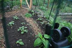 garden in the rain 5