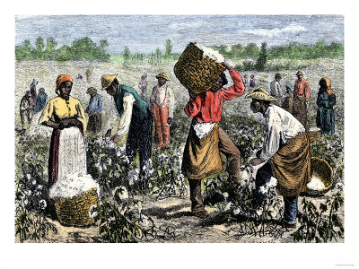 slaves picking cotton. -Picking-Cotton-Giclee-Pr