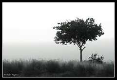 Aside ... (Mostafa saghari) Tags: sunset bw tree persian alone iran persia lonely tone aside khorasan upcoming:event=616375