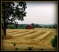 Red Barn (cscott_va.) Tags: barn virginia scene picnik redbarn anawesomeshot impressedbeauty brilliant~eye~jewel