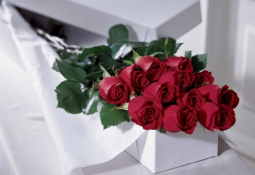 <b>ROSAS DE AMOR ROSES</b> OF <b>LOVE</b>