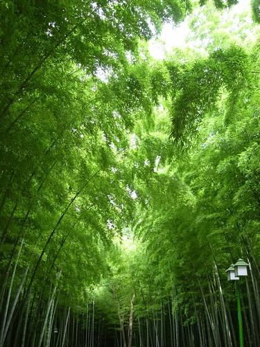 植物园的竹林