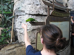 Feed The Birds (Honkyharris) Tags: bird jen kentucky newportaquarium