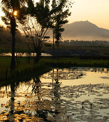 Sunset in Luang Prabang, Laos (Anguskirk) Tags: trees sunset nature water pool leaves misty landscape hotel rice paddy waterlilies fields laos santi ricefields luang montains prabang indochina anawesomeshot hotelvillasantiresort santiresortroadbannadeuayluangprabangluangprabangpobox681laos