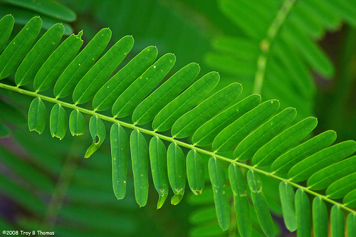 Green6_200807022