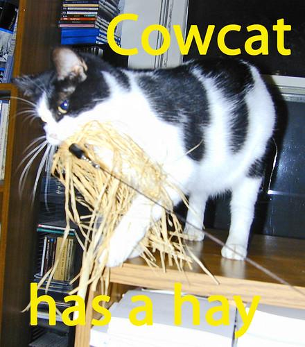 Cowcat