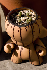 Mini Munny peyote special (Mouldfish) Tags: cactus plant cacti toy kidrobot peyote custom seedling mescaline lophophora munny williamsii