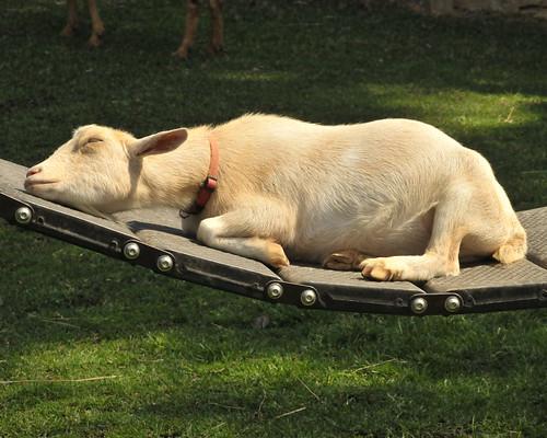 Enjoy a lazy Sunday! by ucumari.