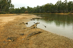 IMG_0796_Murray_River_Corowa