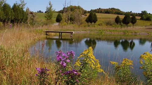 Tom's pond