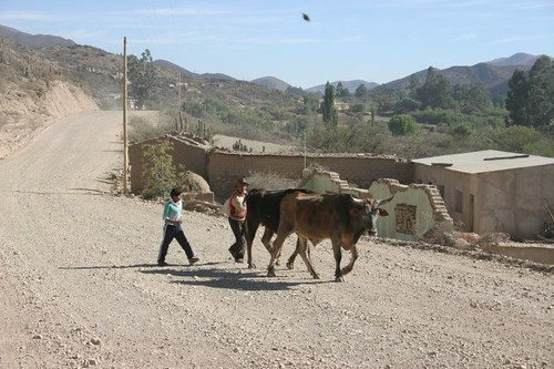 Rural setting, north of Vitichy, southern Bolivia.