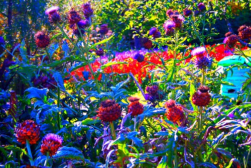 Picnik with wasted artichoke patch