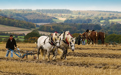 Horse Ploughing Championship at Selborne, Hampshire (Anguskirk) Tags: uk horse animals countryside championship farm eu hampshire southern match plow horsedrawn heavy 2008 plowing association counties loh ploughing selborne mywinners abigfave theperfectphotographer leuropepittoresque