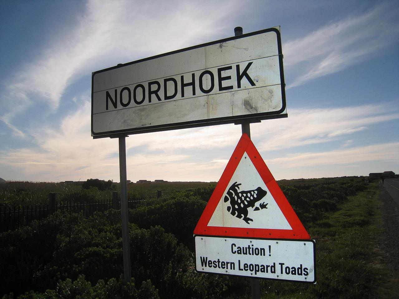 Caution: Western Leopard Toads - near Cape Town